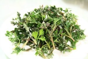 herbs for breast growth