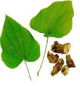 wild yam for growing breasts