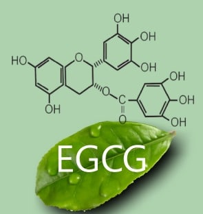 EGCG in green tea