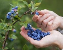 vitamins for blocking free radicals