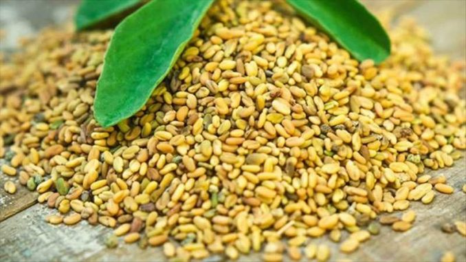 fenugreek for breast growth