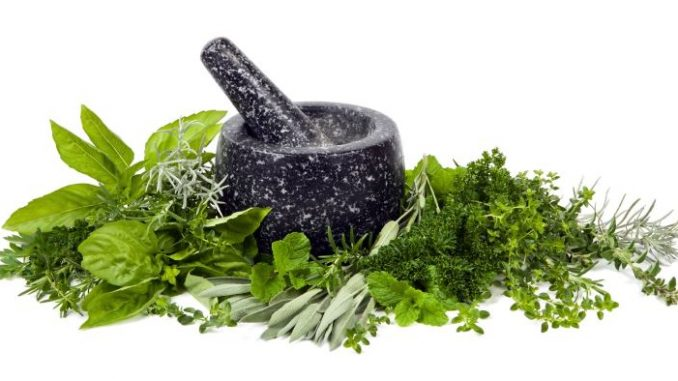 herbs to increase breast size