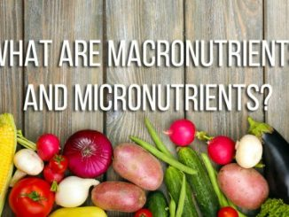 micronutrients and macronutrients
