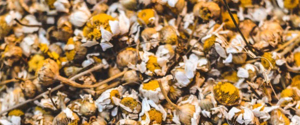 chamomile dried flowers