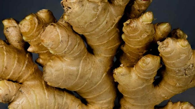ginger herb for constipation