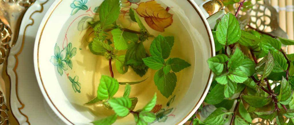 herbal tea for sickness
