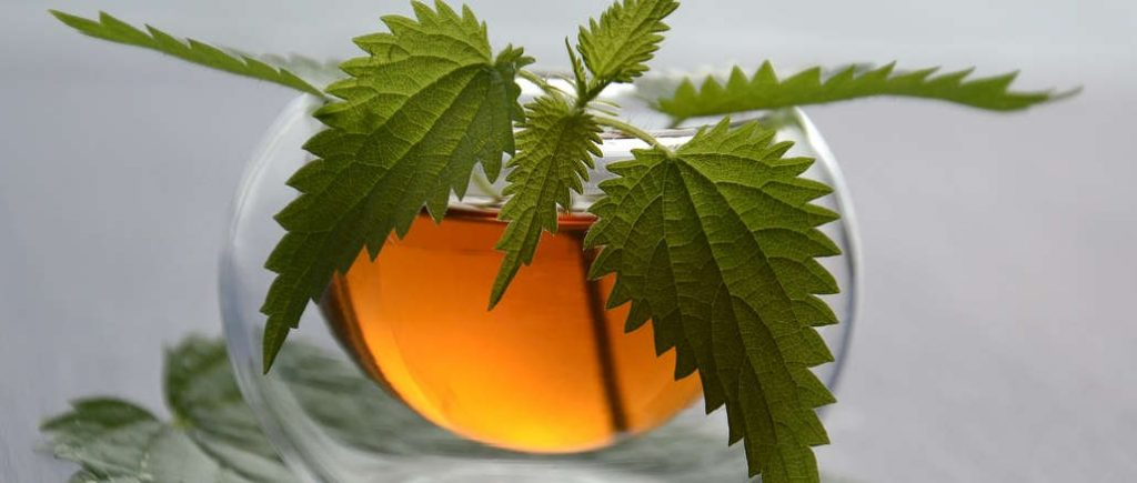 nettle tea benefits