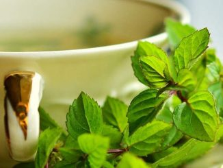 peppermint tea for pregnancy